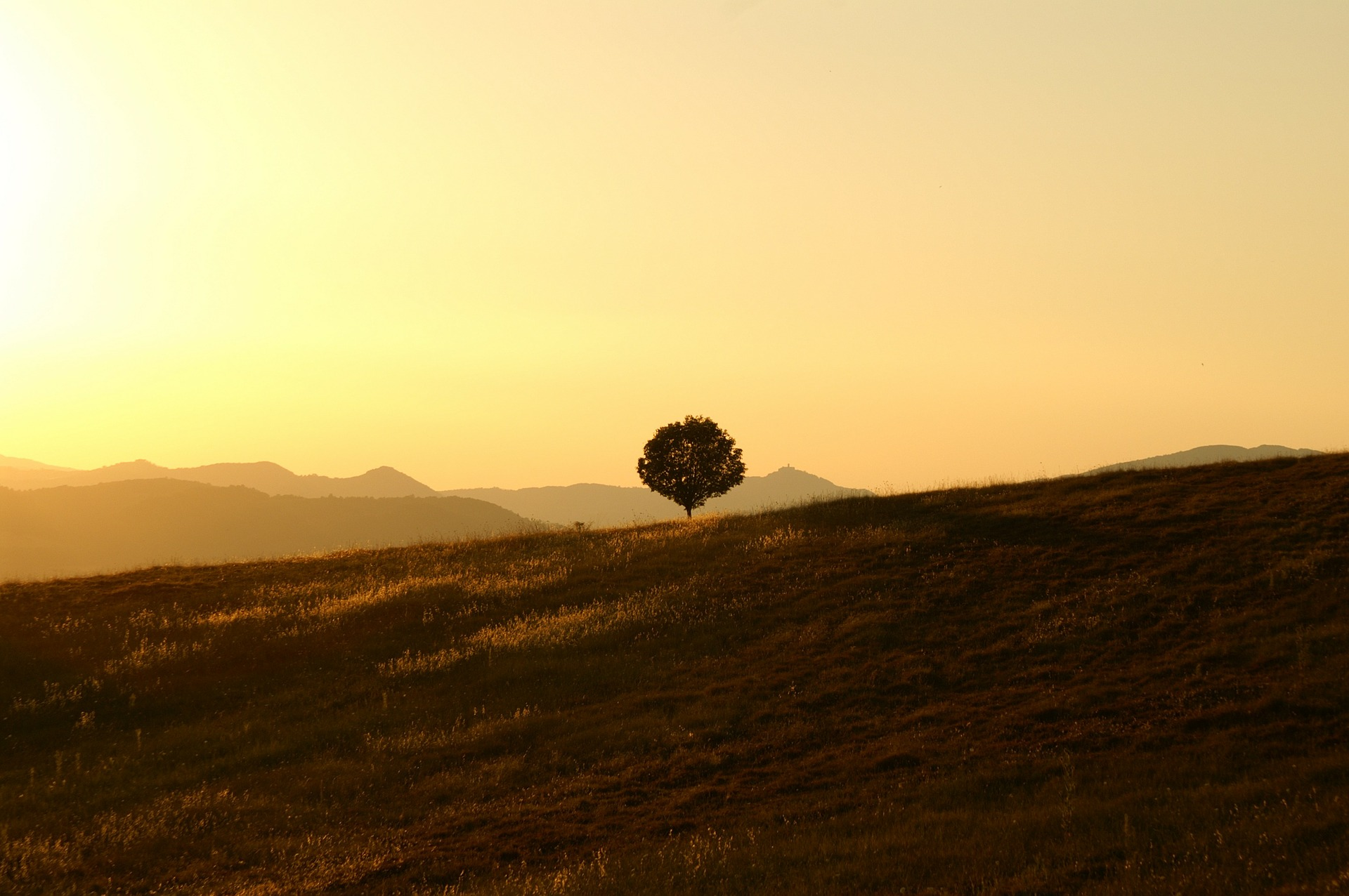 tree-189852_1920