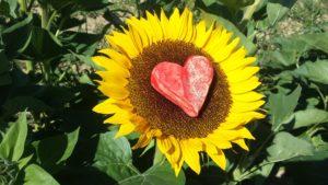 sunflower-970402_1920
