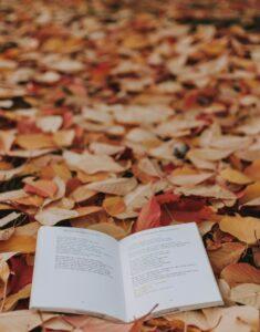 autumn-4589720_1920